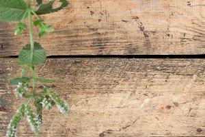 Wood texture part 2 V