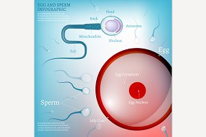 Egg Fertilisation Scheme