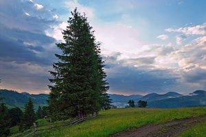 Summer Carpathian mountains, Ukraine