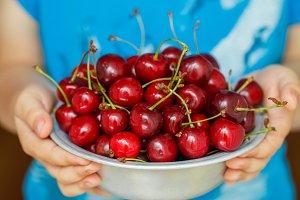 Organic fresh juicy cherries