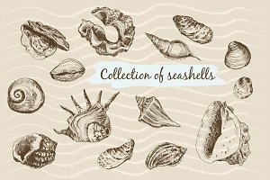 Hand drawn graphic seashells.