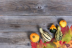 Autumn Treats on Wood