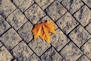 Autumn leaf on the floor