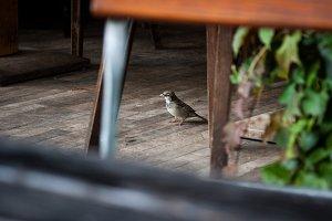 The Café Sparrow