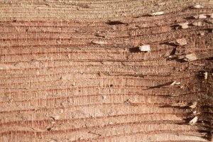 Wood texture part 2 I XXXXI