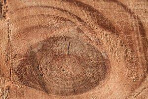 Wood texture part 2 XXXXIII
