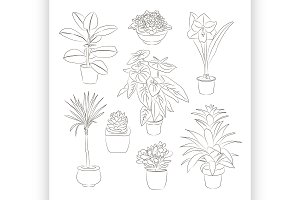 House plants set