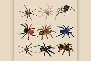 Vector of spiders set