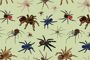 Spiders vector set pattern