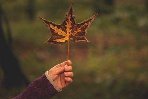 Woman holding autumn leaf