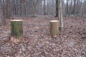Just stumps