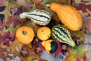 Those Fall Gourds