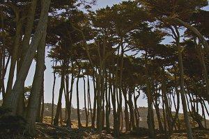 Lands End - Trees