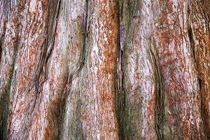 red tree bark background