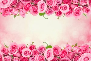 Rose for love romantic background