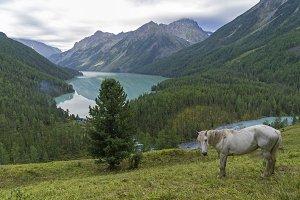 White horse on a hillside.