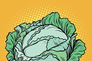 Cabbage, healthy vegetarian food