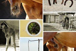 colt and rural landscapes
