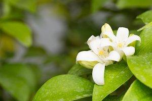 Macro has small white flowers.