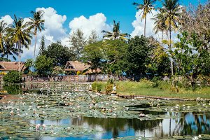 Beautiful Lotus Lagoon pond surrounded by tropical palm trees nature in Candidasa, Bali. Travel to Indonesia, Asia.