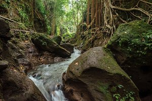 Nature beauty of small river in stones of tropical jungle forest at the Sacred Monkey Sanctuary, Ubud, Bali, Indonesia