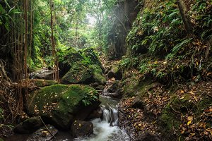 Small river in stones of tropical jungle forest at the Sacred Monkey  Sanctuary, Ubud, Bali, Indonesia