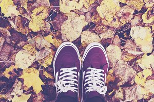 Sneakers in autumn leaves