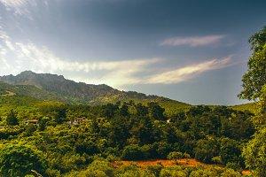 Jungle mountains