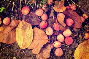 Grunge autumn background