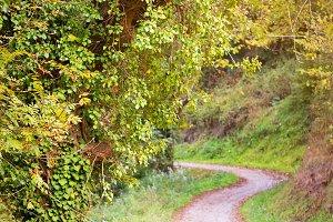 Autum forest pathway