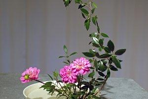 Ikebana n° 5.