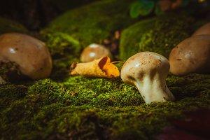 Wet mushroom puffball grows on green moss