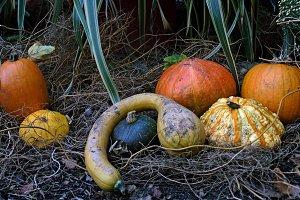 Autumn,Pumkin theme n°1