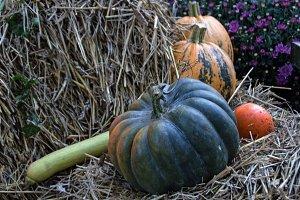 Autumn,Pumkin theme n°2