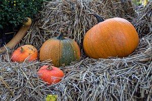 Autumn,Pumkin theme n° 3.
