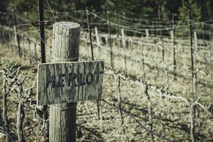 Merlot Sign in the Vineyards