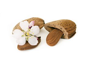 Almond And Flower Isolated On White