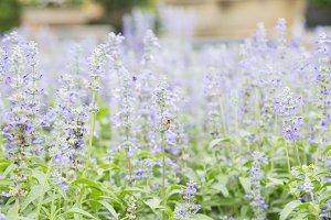 bouquet of blue flowers.