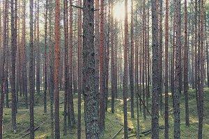 Forest. Spring