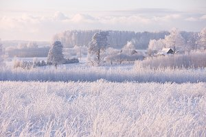 Field and trees in frost