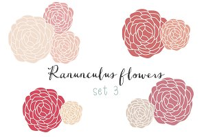Ranunculus clip art set 3