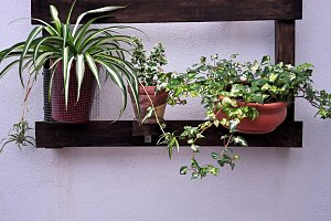 wooden planter and pots outdoors