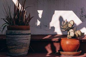 Dramatic Plants