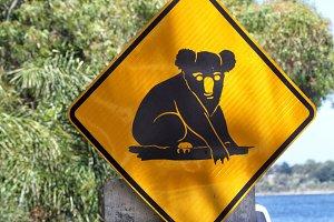 Attention Koalas