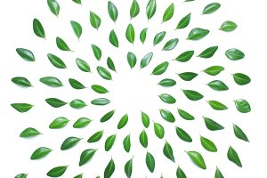 The spiral design of green leaves