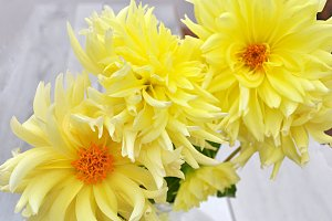 last yellow dahlias