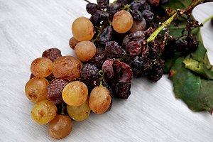 dry bunch of grapes