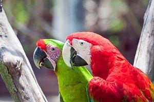 Bright parrot