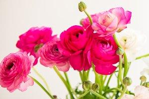 Bright Ranunculus