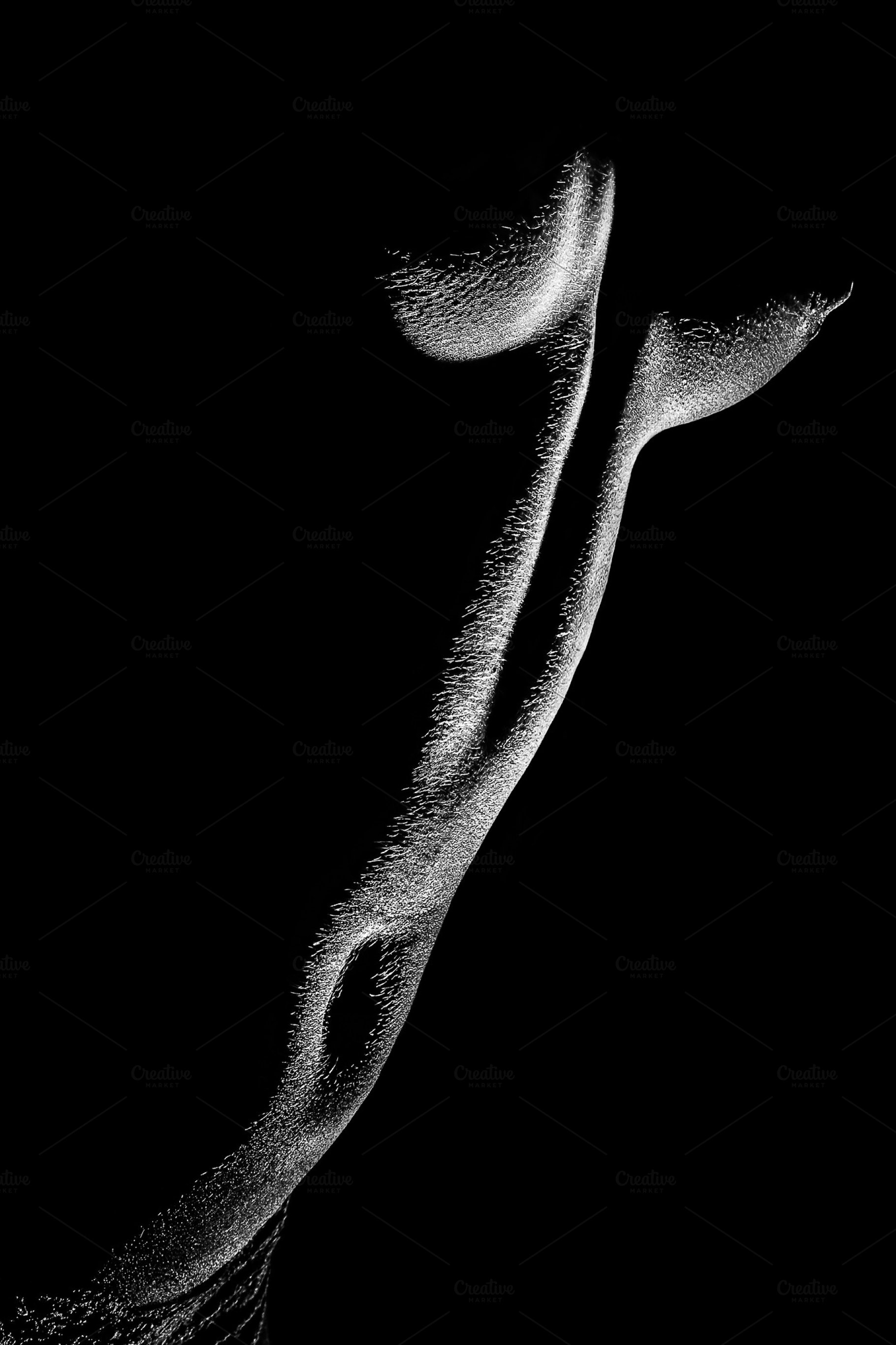 Naked woman body part bw